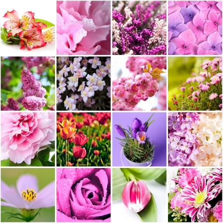 closeup beautiful lilac and pink flowers collage photo