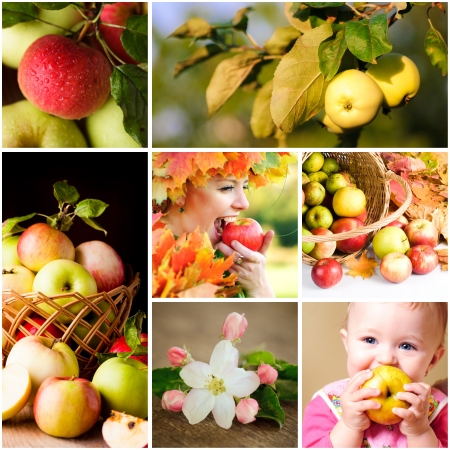 Fresh various apples closeup in situations photo