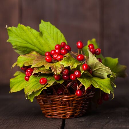 guelder: Still life with guelder rose on the wood background