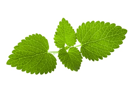 Fresh melissa leaves isolated on white background photo