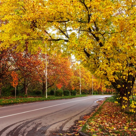 Autumn landscape with road and yellow and red leaves photo