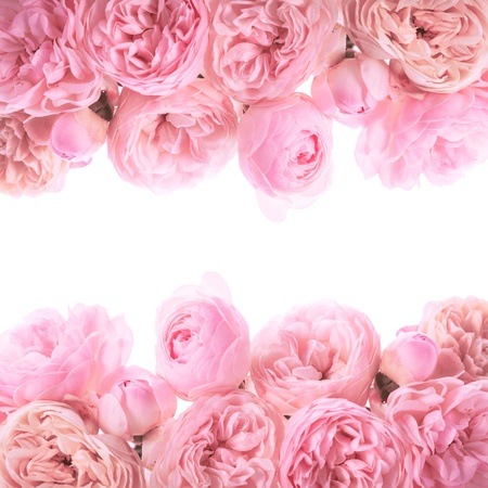 Pink roses border design isolated on white photo