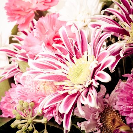 pink aster background closeup nature photo