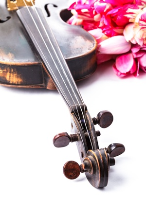 Black old violin with bouquet of pink tulips on white - concert concept Stock Photo - 17304728