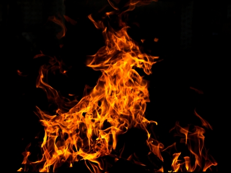 Abstract fire animal over black background Stock Photo - 17304640