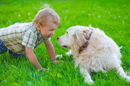 Cute two years blonde boy with golden retriever on the grass photo