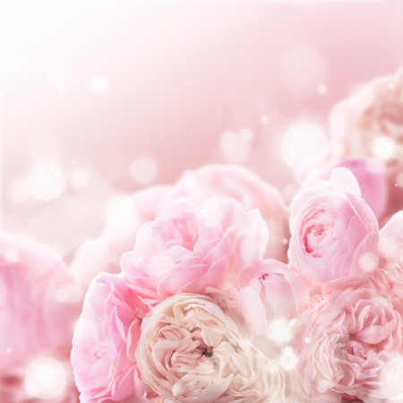 Pink roses bunch as a wedding background for design photo