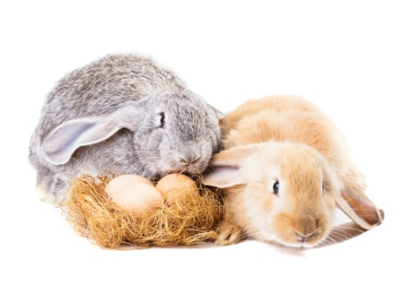 nestle: Rabbits near nestle with eggs isolated on white. Easter time.