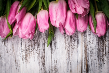 vintage background pattern: Pink tulips over shabby white wooden table Stock Photo