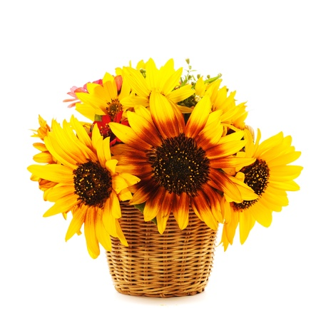 Bouquet from sunflowers in basket isolated on white photo