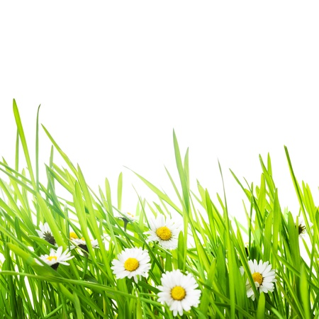 border with green grass and daisy flowers for spring design