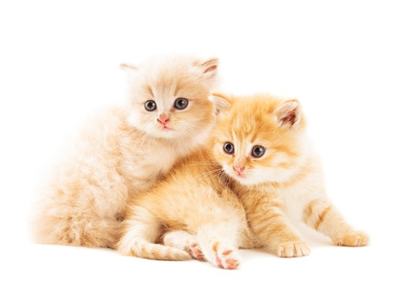 Two ginger kittens lying on white background photo