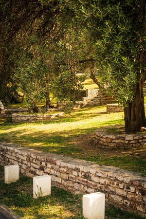 agrarian: Olive trees. Mediterranean garden in the morning Stock Photo