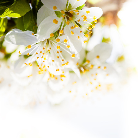 Beautiful spring bokeh for design with copyspace photo