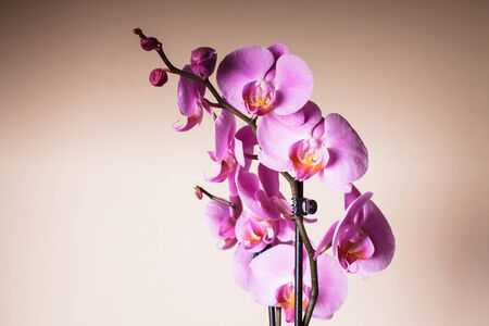 Purple orchid flower very close up as a background Stock Photo