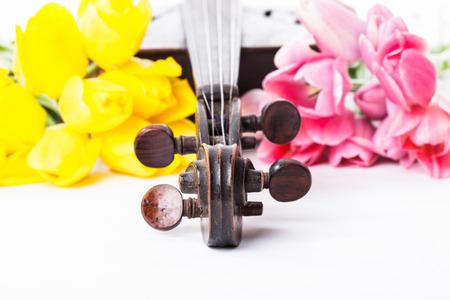 fiddlestick: Pieza del viol�n negro y arco de viol�n con los tulipanes en blanco Foto de archivo