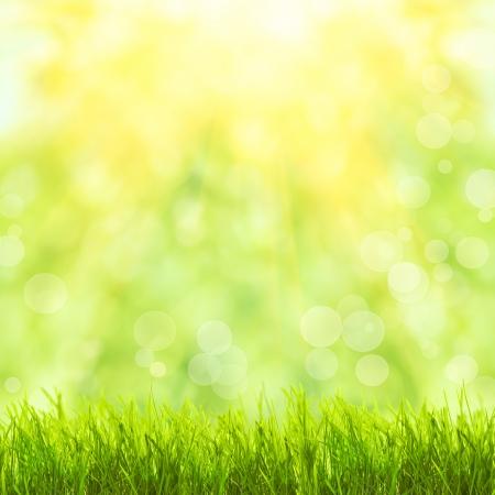 Hierba verde sobre el bokeh de primavera y la luz solar