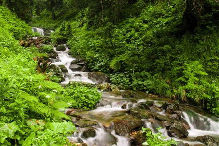 ravine: Mountain stream in green summer forest in Carpathian mountains Stock Photo