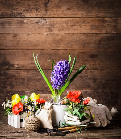 Garden tools for flowers over wooden background photo