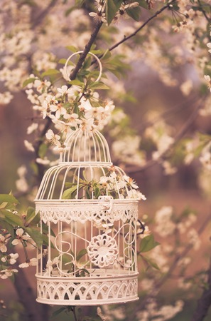 Bird cage on the cherry blossom tree in sunset. Vintage toned Stock Photo