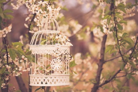 Bird cage on the cherry blossom tree in sunset. Vintage toned photo