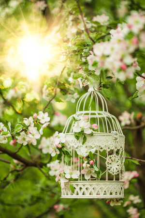Bird cage on the apple blossom tree in sunset. c photo