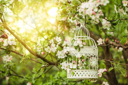 석양에 꽃 사과 나무에 새장.