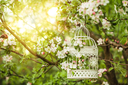 Bird cage on the apple blossom tree in sunset. Stock Photo