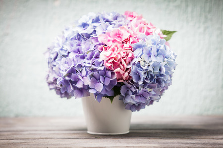 Hydrangea flowers in the white bucket on the wooden table photo