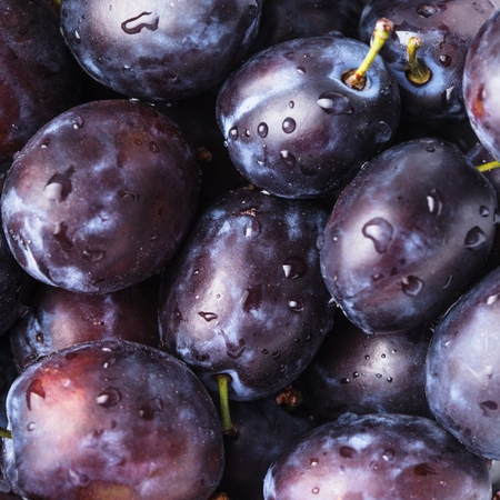 fleshy: Fleshy wet plums close up as a background