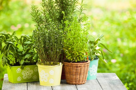 Cozy home garden with herbs - rosemary, sage, basil, thyme and oregano Banco de Imagens