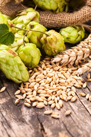 Barley and hops on a wooden background. Beer concept photo