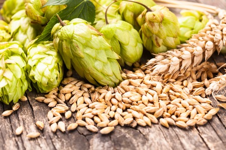 ingredient: Barley and hops on a wooden background. Beer concept