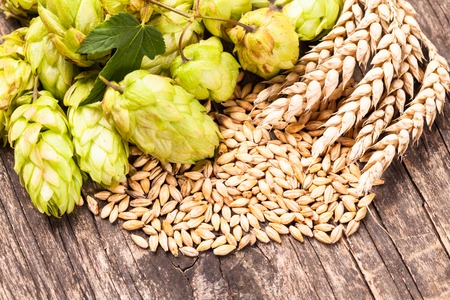 beer production: Barley and hops on a wooden background. Beer concept