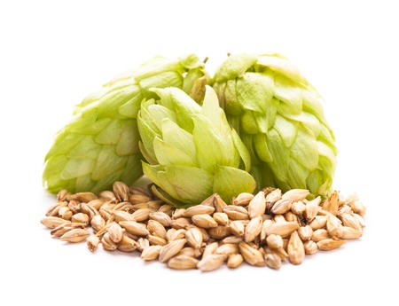 Barley and hops isolated on white background. Beer concept photo