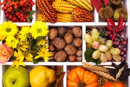 Autumn in a box - fruits, berries, nuts, flowers, corn and pumpkins photo
