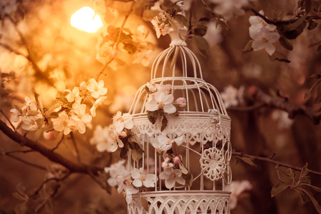 evening glow: Bird cage on the apple blossom tree in evening glow