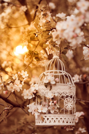 Bird cage on the apple blossom tree in evening glow photo