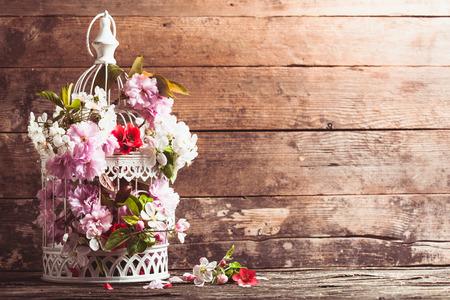 Cage à oiseaux avec ressort fleur de Sakura et de fruits fleurs. Décorations de mariage avec copie espace Banque d'images - 37849498
