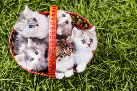 kitten: Kittens in the basket