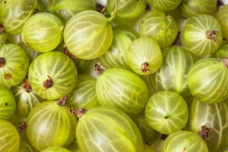 pulpy: Green gooseberry