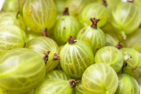 gooseberry: Gooseberry verde Foto de archivo