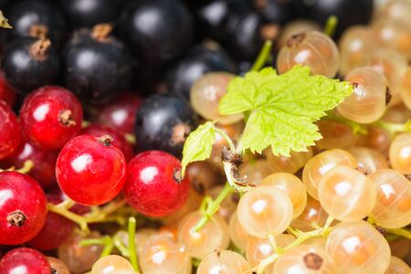 Currants types - white, red and black berries photo
