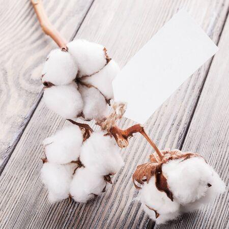 organic cotton: Cotone organico
