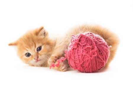 pink pussy: Red playful kitten with purple ball of yarn, is lying on white Stock Photo