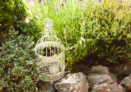 rockery: Lavender on rockery with birdcage decorations and rocks