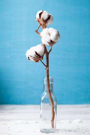 Cotton flower close up on blue background Foto de archivo