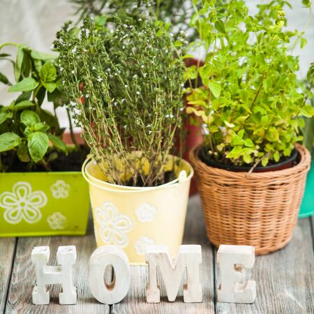 gardening: Cozy home garden with herbs - rosemary, sage, basil, thyme and oregano Stock Photo