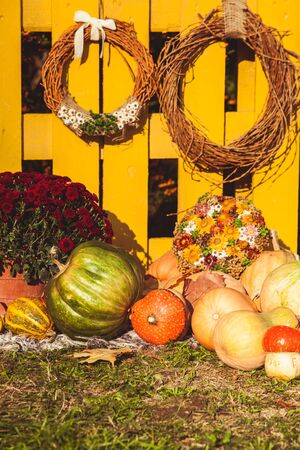 Autumn harvest festival - basket with autumn fruits, old suitcase, pumpkins and colorful autumn flowers. Landscape design in the country style for fall season. Stock Photo