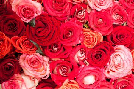 Rosso e rose rosa sfondo, modello per il design di nozze